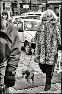 straat,hond,honden