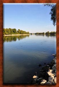 Flussbestattung Köln