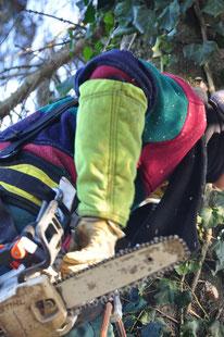 Abattage dangereux - Entreprise de Parcs et Jardins Laurent Toussaint