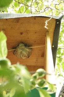 Nest am neuen Standort.