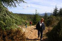 Bild: Wanderung Fôret des Cèdres Bonnieux
