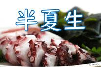 半夏生(ハンゲショウ)
