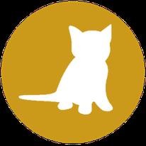 Kitten gewenning