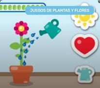 Cuidar una Planta