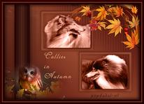 Collie in Autumn