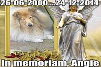 Angie: 26-06-2000 / 24-12-2014