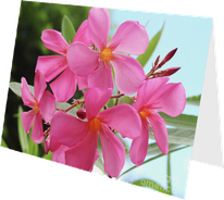 Oleander House / SHOP FOR OLEANDER ART / Greeting cards