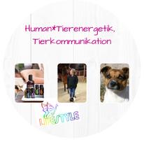 Mit einem Klick gelangst du direkt zu dem Thema Organetik, Human- und Tierenergetik, Tierkommunikation