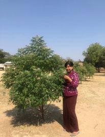 植えて約8か月が経ったニームと校長先生。自分で植えた苗木を管理することで、子どもたちにも木に対する愛着の心が育ってきているとのこと