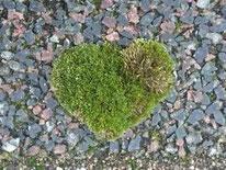 ハート形の苔