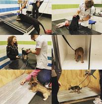 De Hondenleerschool - Dé Hondenschool van Gouda - Detectie