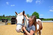 Dorntherapie am Pferd