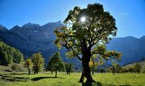 Herbstsonne am Ahornboden
