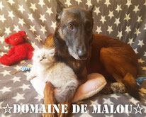 chat/chien