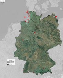 Gelbbrauen-Laubsänger-Beobachtungen in Deutschland seit Anfang September 2015 (Quelle: ornitho.de)