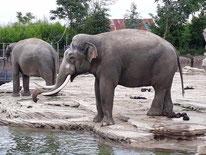 dierentuin tickets verschillende aanbieders