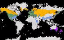 Karte zur weltweiten Verbreitung der Stockente.