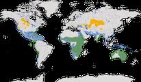 Karte zur Verbreitung der Familie der Pelikane