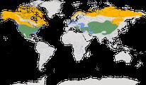 Karte zur Verbreitung der Ohrenlerche (Eremophila alpestris)