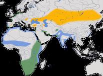 Karte zur Verbreitung des Säbelschnäblers (Recurvirostra avosetta)