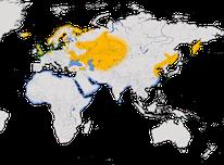 Karte zur Verbreitung des Austernfischers (Haematopus ostralegus)