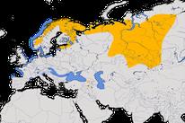 Karte zur Verbreitung der Samtente