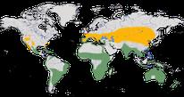 Karte zur Verbreitung des Stelzenläufers (Himantopus himantopus)