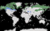 Karte zur Verbreitung des Alpenschneehuhn (Lagopus muta) weltweit.