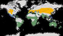 Karte zur Verbreitung der Familie der Säbelschnäbler (Recurvirostridae)