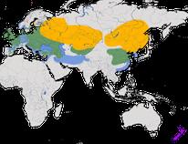 Karte zur Verbreitung der Saatkrähe (Corvus frugilegus)