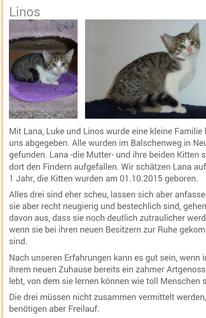 (obiger Bild/Textnachweis Tierheim Steinhuder Meer)