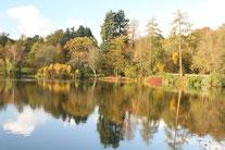 Steinbrücker Teich im Herbst