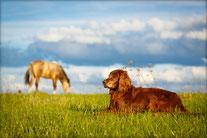 Cutivet Hund und Pferd