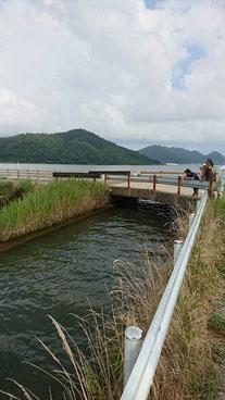 その後はバスで水路沿いを進みました 末端は久々子湖につながっています