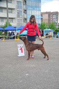 тайский_риджбек,выставка,чемпион,победитель,питомник,thairidgeback_dog,show,ukraine,winner,mani_daeng_kennel