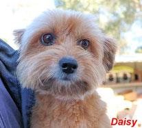 Daisy - geb. 09/2011