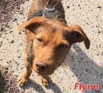 Flynn, geb. 11/2018