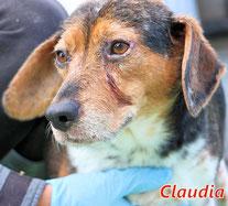 Claudia - geb.  05/2017