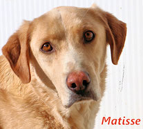 Matisse - geb. 09/2013