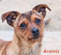 Aramis - Region Lanusei - geb. 05/2019