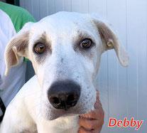 Debby (Mädel 2) - geb. 02/2020