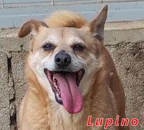 Lupino - Region Lanusei - geb. 11/2015