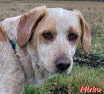 Mirko - SardinienHunde e.V.