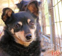 Lila - Region Lanusei - geb. 12/2014