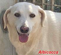 Albicoccia - geb. 06/2016