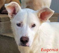 Eugenia - geb. 08/2019