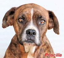 Priscilla - geb. 01/2013