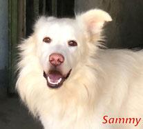 Sammy - Regio Lanusei - geb. 01/2018