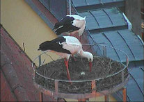 Foto: Webcam Crailsheim