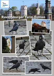 Poster: Maximilian Dechant - NABU Projekt Ravensburger Turm Dohlen